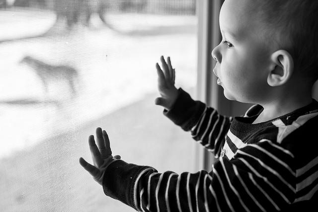 dog, toddler, window